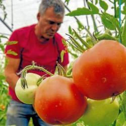 Darán detalles para estar en Compra Rural Santander